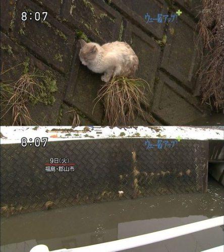 Кот на разрушенном мосте