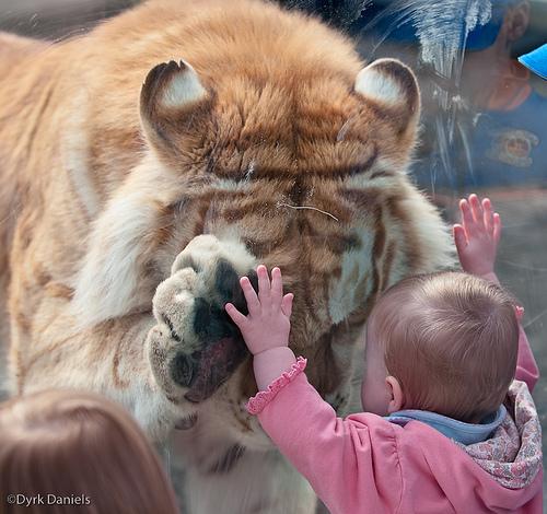 Ребенок и тигр