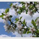 И наступила Весна…