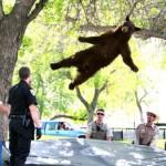Лучшие картинки за апрель 2012