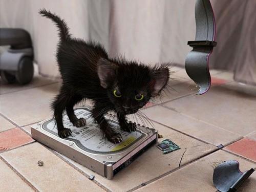 Страшный котэ