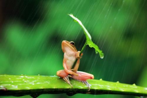 Лягушонок прячется под зеленым листиком